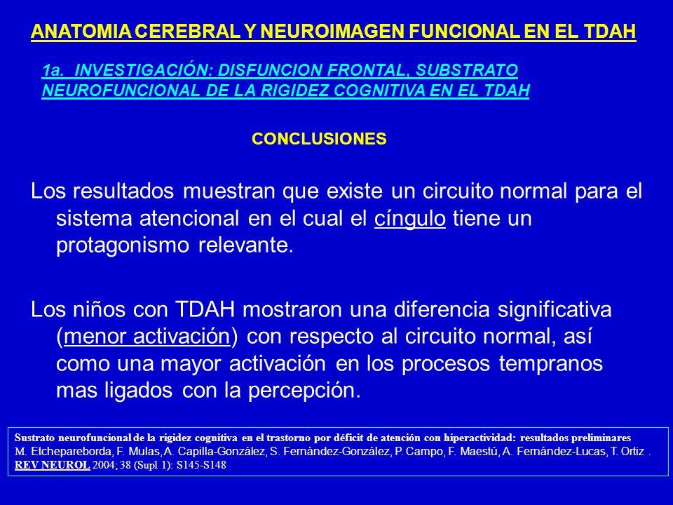 ANATOMIA CEREBRAL Y NEUROIMAGEN FUNCIONAL EN EL TDAH