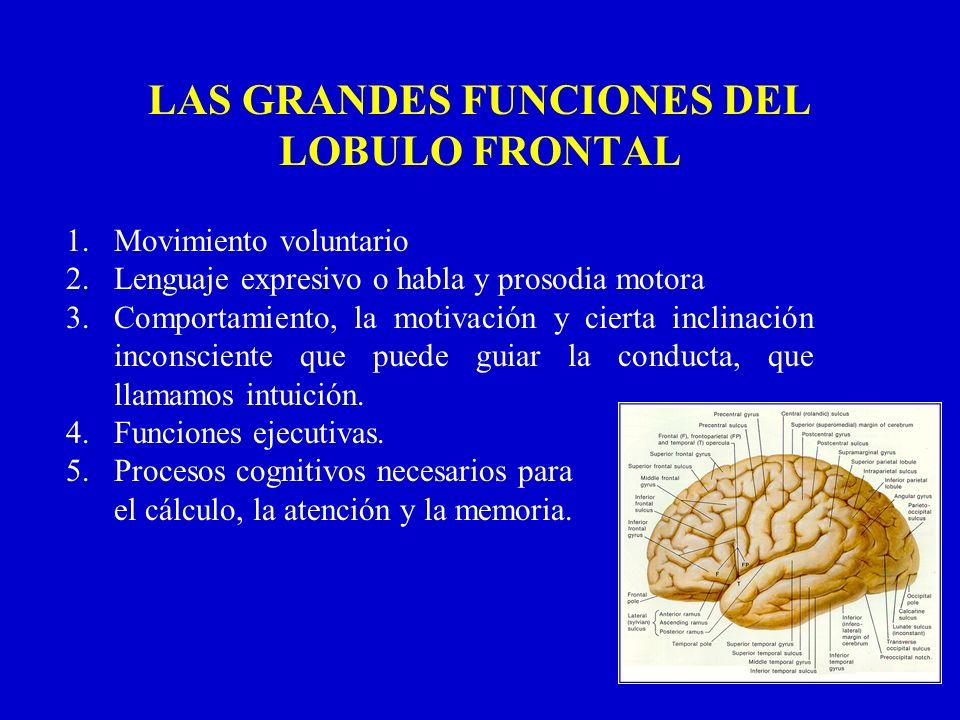 LAS GRANDES FUNCIONES DEL LOBULO FRONTAL