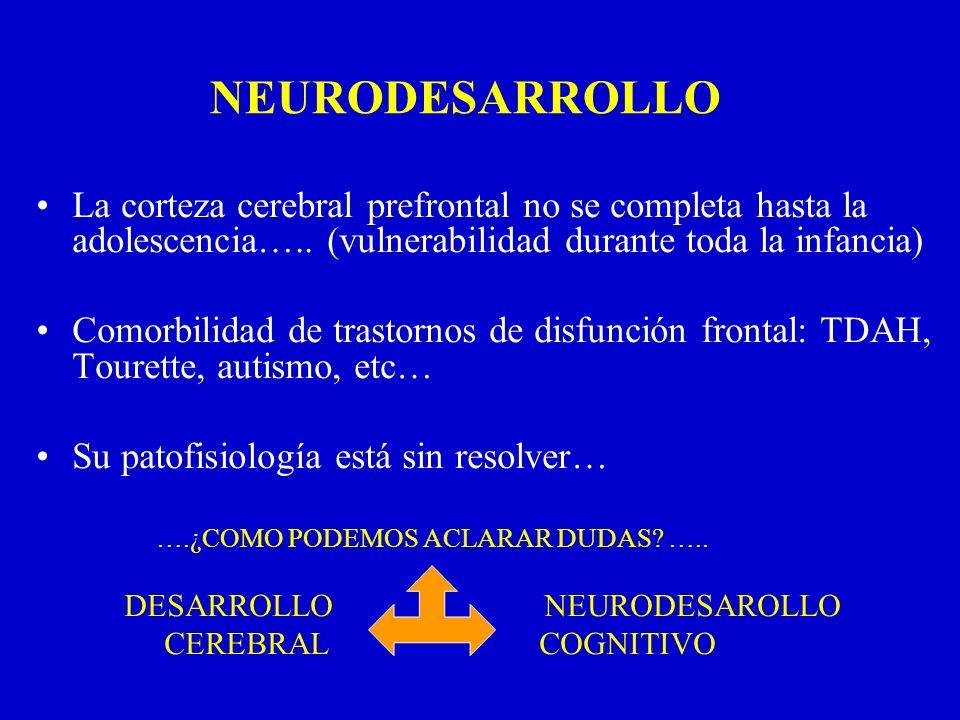 NEURODESARROLLO La corteza cerebral prefrontal no se completa hasta la adolescencia….. (vulnerabilidad durante toda la infancia)