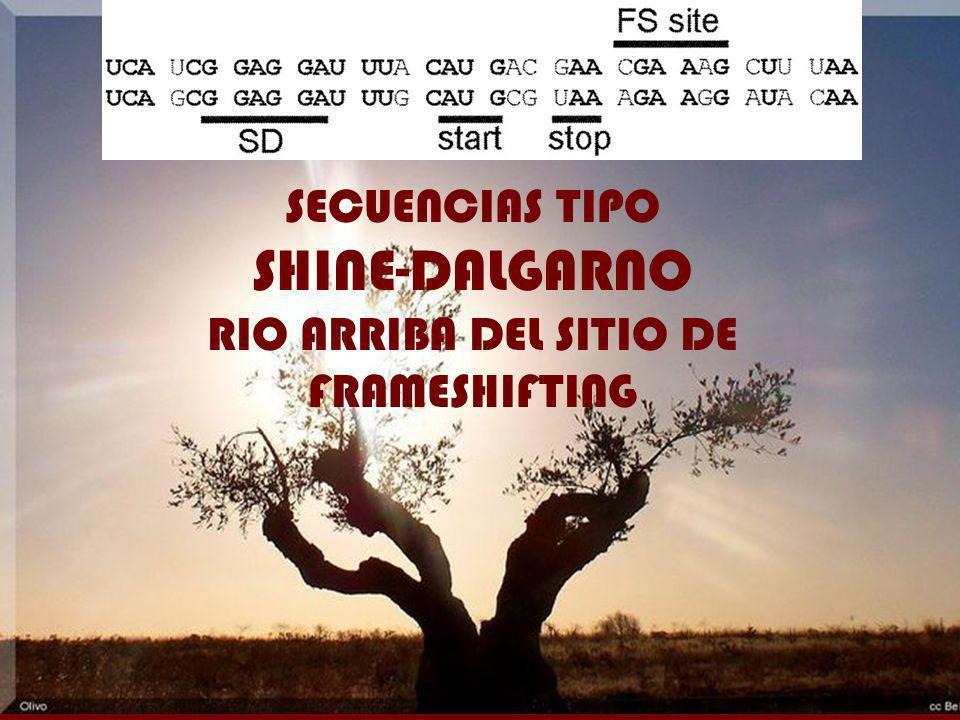 RIO ARRIBA DEL SITIO DE FRAMESHIFTING
