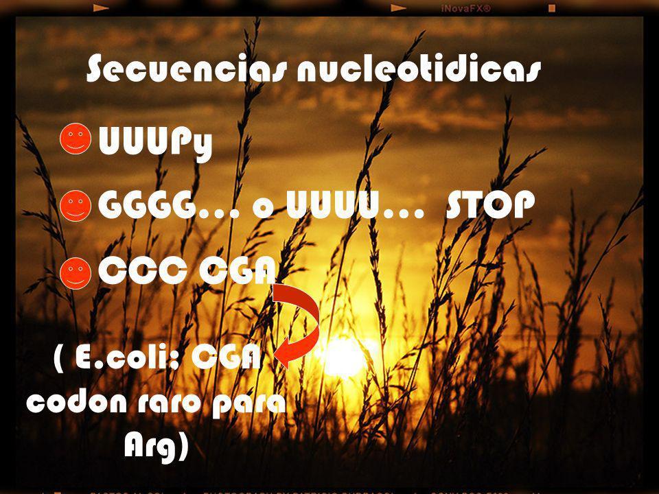 ( E.coli; CGA codon raro para Arg)