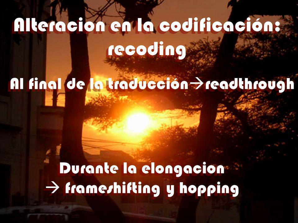 Alteracion en la codificación: recoding