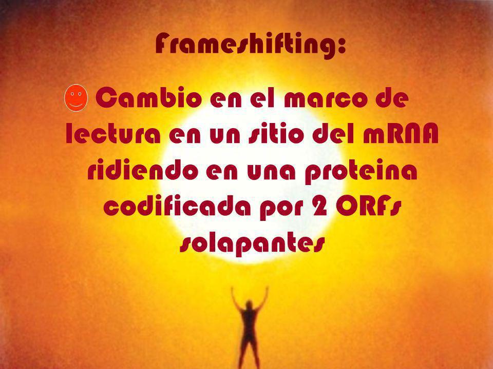 Frameshifting: Cambio en el marco de lectura en un sitio del mRNA ridiendo en una proteina codificada por 2 ORFs solapantes.