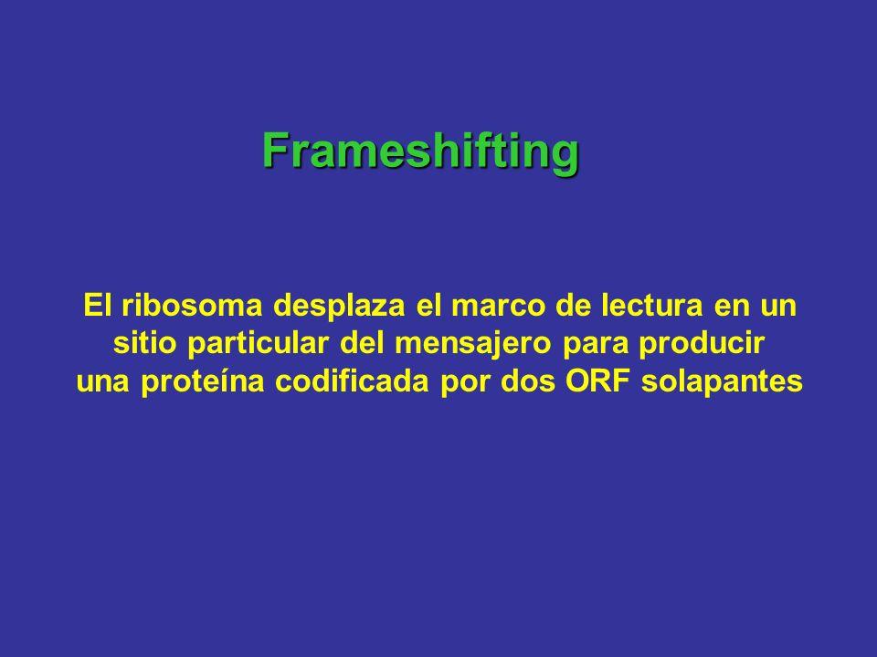 Frameshifting El ribosoma desplaza el marco de lectura en un