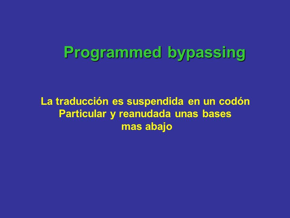 Programmed bypassing La traducción es suspendida en un codón