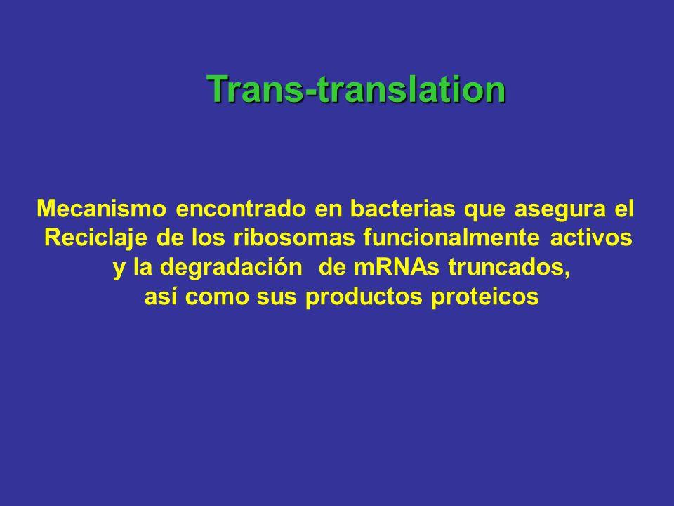Trans-translation Mecanismo encontrado en bacterias que asegura el