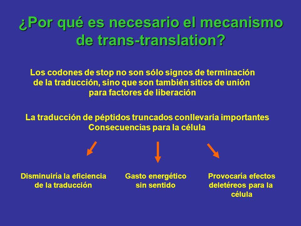 ¿Por qué es necesario el mecanismo de trans-translation