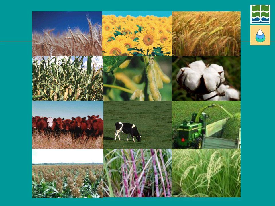 Otros cultivos y actividades ofrecen mayores oportunidades de diversificación y reducci~n del riesgo (que hay que evaluar).