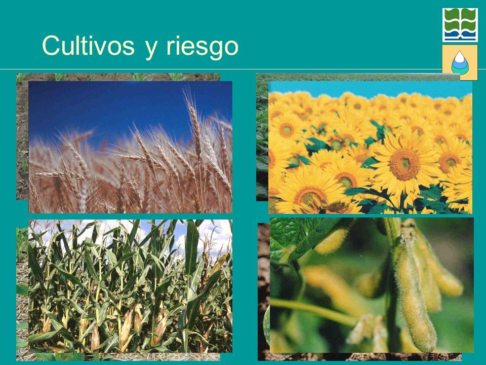 Cultivos y riesgo Éstos son los actores principales en la región pampeana. En otras zonas hay otros cultivos y algunos también los hemos incluido.