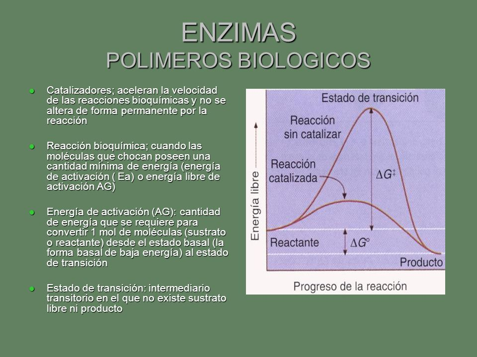 ENZIMAS POLIMEROS BIOLOGICOS