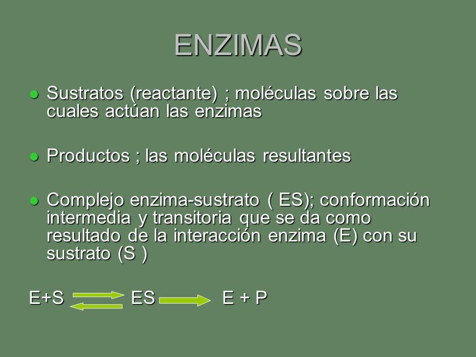 ENZIMAS Sustratos (reactante) ; moléculas sobre las cuales actúan las enzimas. Productos ; las moléculas resultantes.