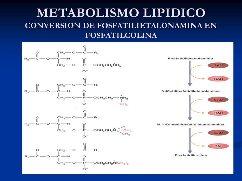 METABOLISMO LIPIDICO CONVERSION DE FOSFATILIETALONAMINA EN FOSFATILCOLINA