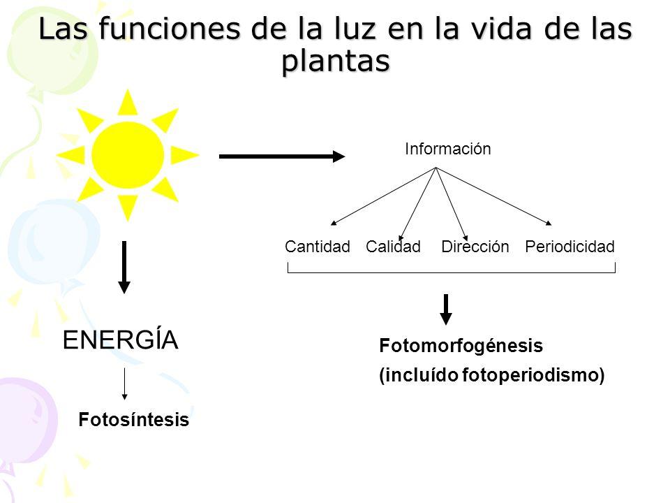 Las funciones de la luz en la vida de las plantas