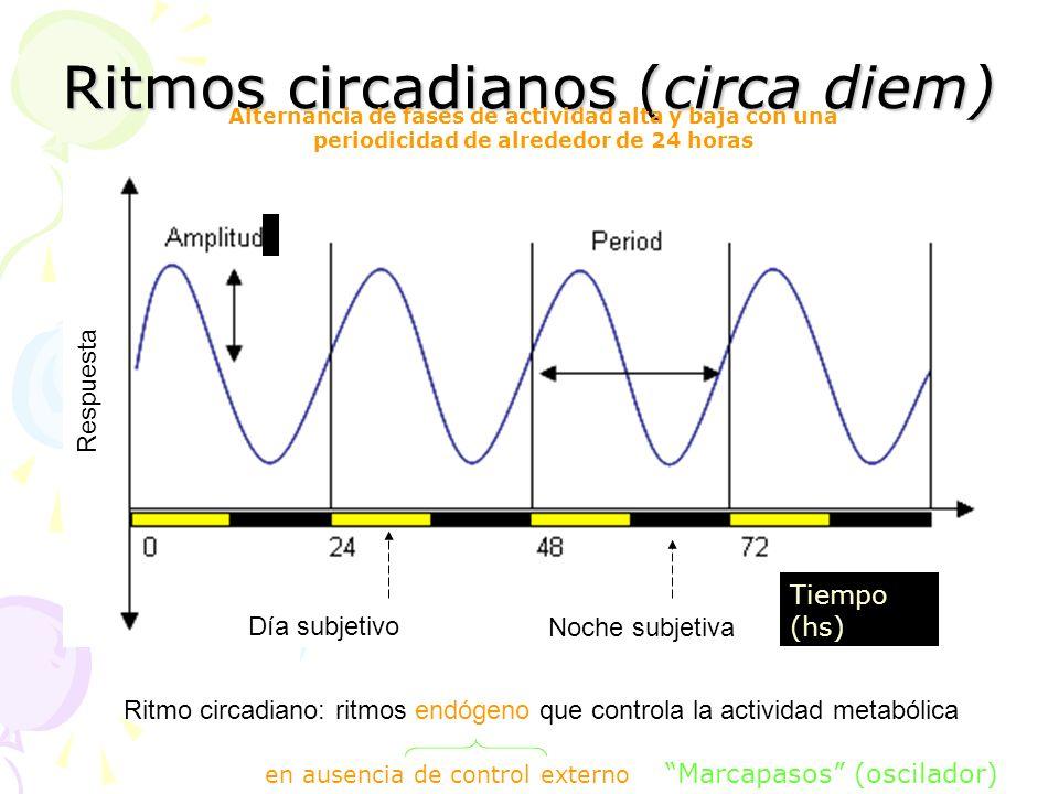 Ritmos circadianos (circa diem)