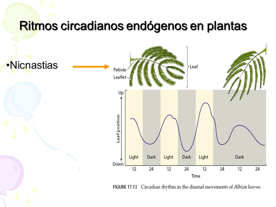 Ritmos circadianos endógenos en plantas