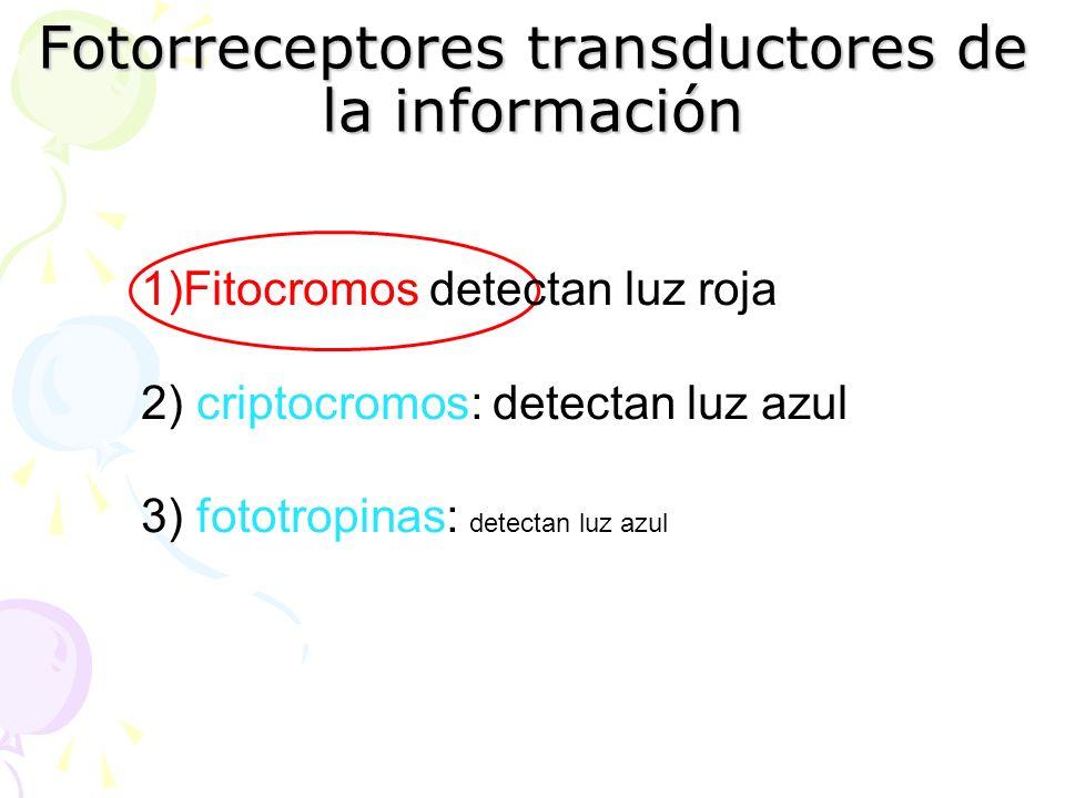 Fotorreceptores transductores de la información