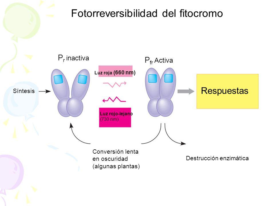 Fotorreversibilidad del fitocromo