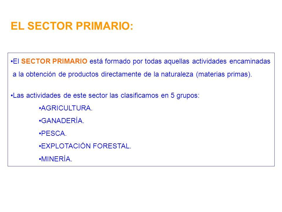 EL SECTOR PRIMARIO: El SECTOR PRIMARIO está formado por todas aquellas actividades encaminadas.
