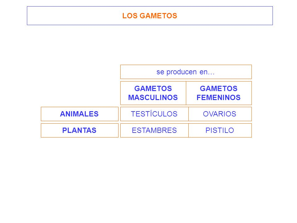 LOS GAMETOS se producen en… GAMETOS. MASCULINOS. GAMETOS. FEMENINOS. ANIMALES. TESTÍCULOS. OVARIOS.