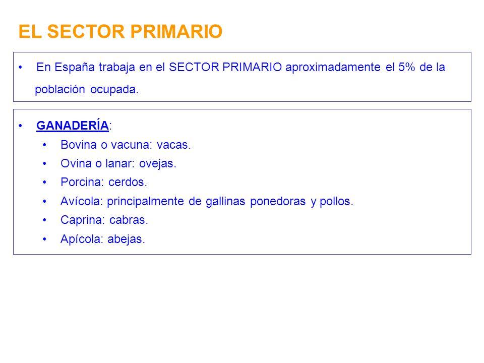EL SECTOR PRIMARIO En España trabaja en el SECTOR PRIMARIO aproximadamente el 5% de la. población ocupada.