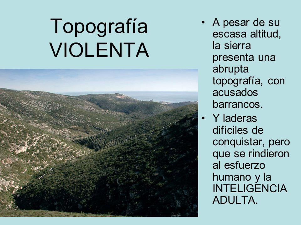 Topografía VIOLENTA A pesar de su escasa altitud, la sierra presenta una abrupta topografía, con acusados barrancos.