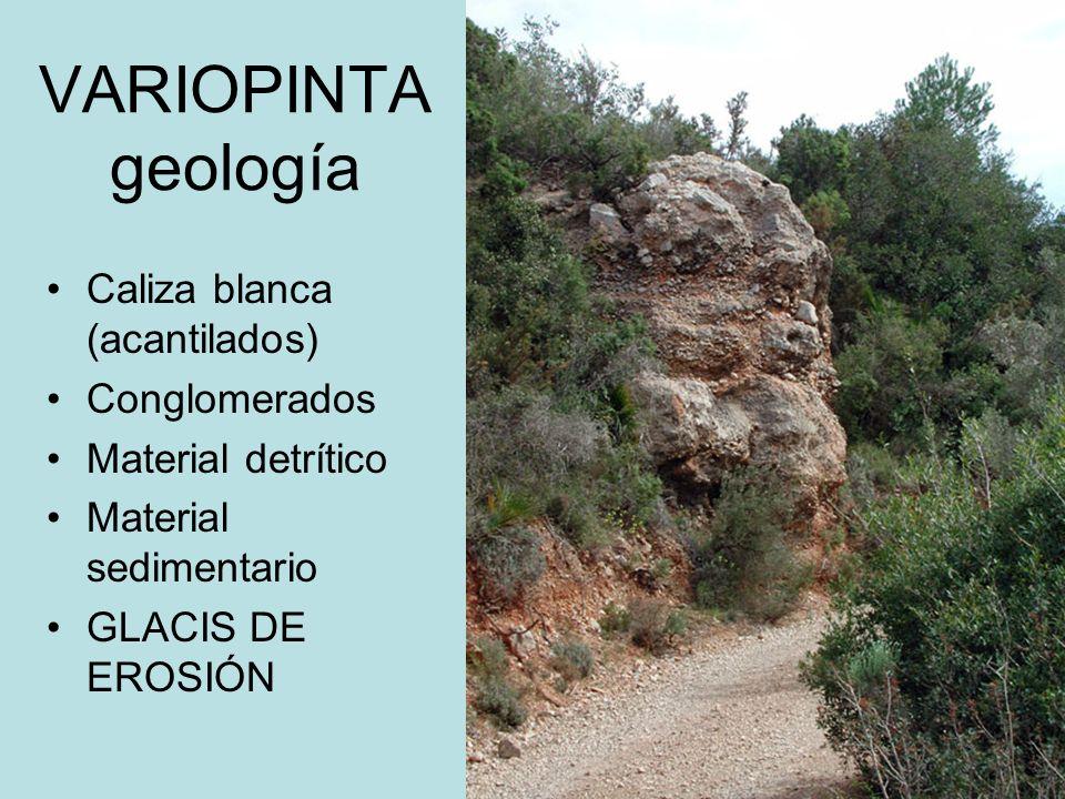 VARIOPINTA geología Caliza blanca (acantilados) Conglomerados