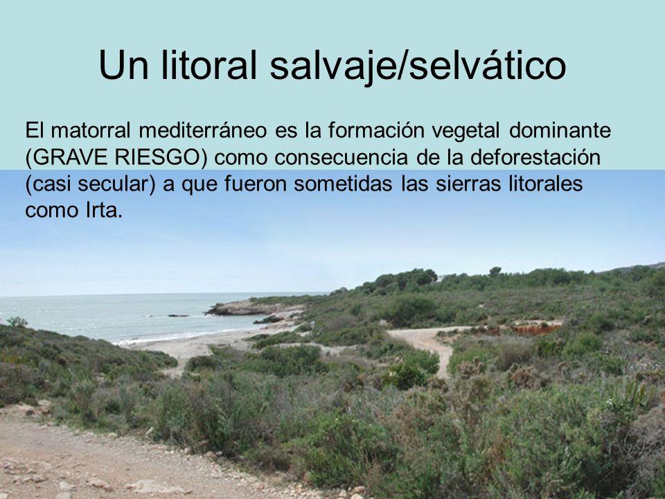 Un litoral salvaje/selvático