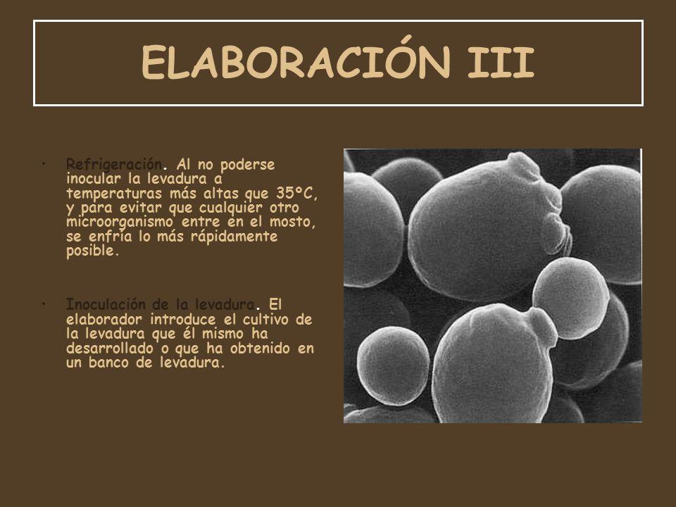 ELABORACIÓN III