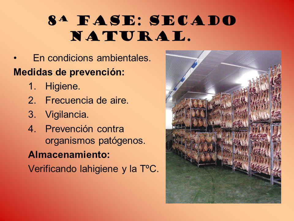 8ª Fase: Secado natural. En condicions ambientales.
