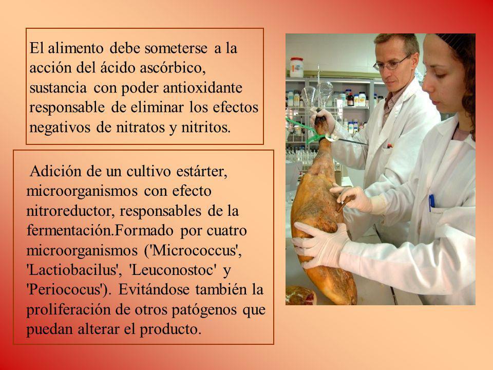 El alimento debe someterse a la acción del ácido ascórbico, sustancia con poder antioxidante responsable de eliminar los efectos negativos de nitratos y nitritos.
