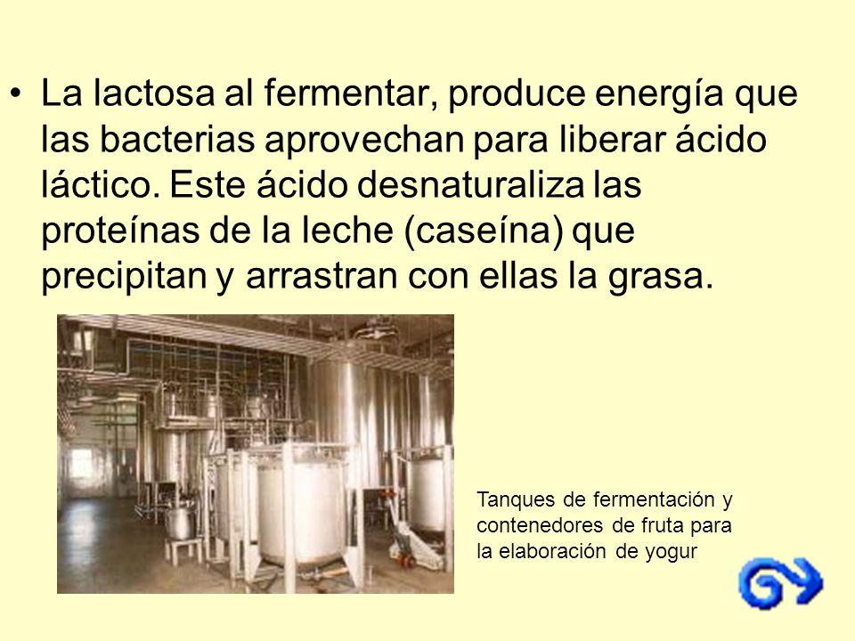 La lactosa al fermentar, produce energía que las bacterias aprovechan para liberar ácido láctico. Este ácido desnaturaliza las proteínas de la leche (caseína) que precipitan y arrastran con ellas la grasa.
