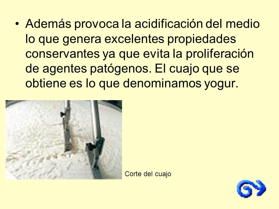 Además provoca la acidificación del medio lo que genera excelentes propiedades conservantes ya que evita la proliferación de agentes patógenos. El cuajo que se obtiene es lo que denominamos yogur.