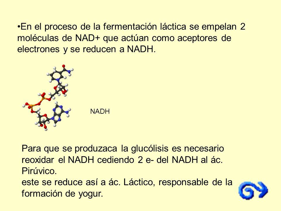 En el proceso de la fermentación láctica se empelan 2 moléculas de NAD+ que actúan como aceptores de electrones y se reducen a NADH.