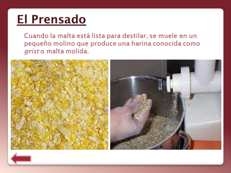 El Prensado Cuando la malta está lista para destilar, se muele en un pequeño molino que produce una harina conocida como grist o malta molida.