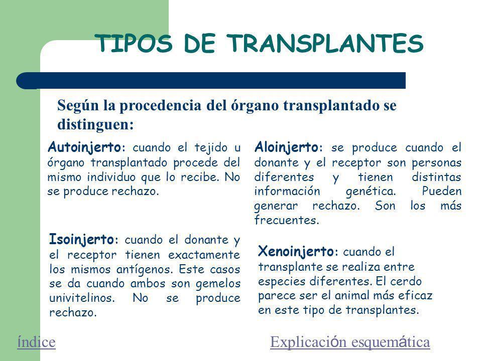 TIPOS DE TRANSPLANTES Según la procedencia del órgano transplantado se distinguen: