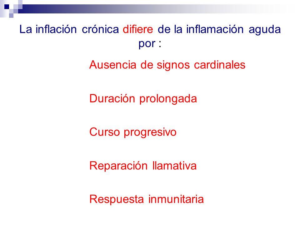 La inflación crónica difiere de la inflamación aguda por :