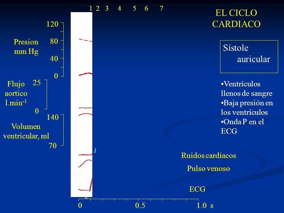 EL CICLO CARDIACO Sístole auricular 120 80 40 Presion mm Hg