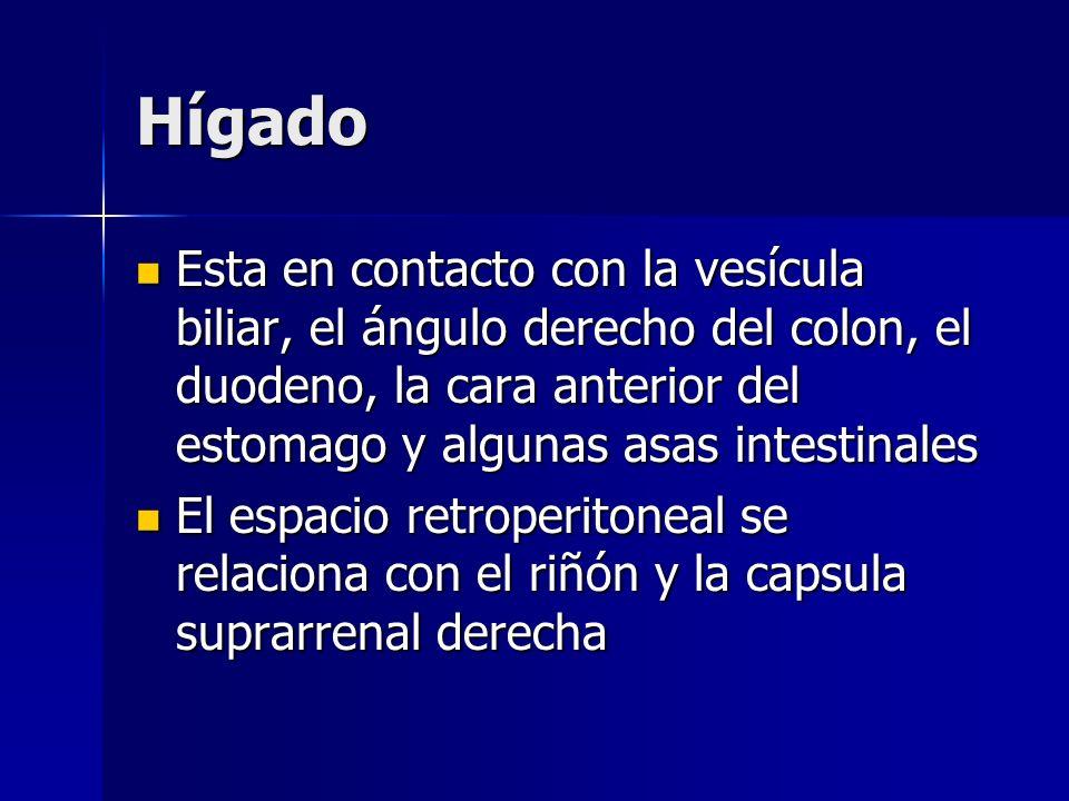 HígadoEsta en contacto con la vesícula biliar, el ángulo derecho del colon, el duodeno, la cara anterior del estomago y algunas asas intestinales.