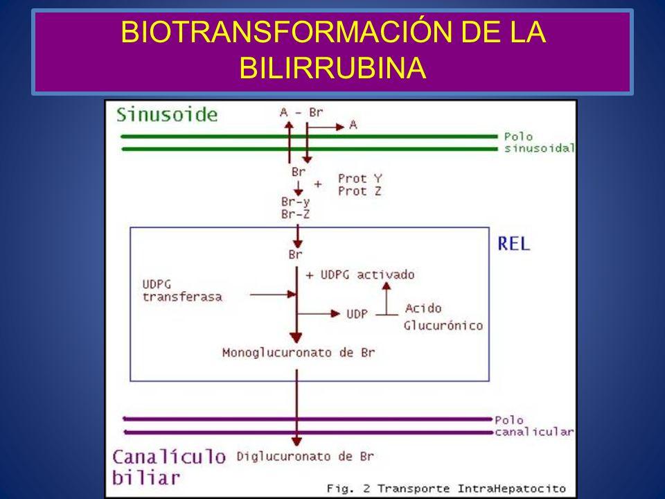 BIOTRANSFORMACIÓN DE LA BILIRRUBINA