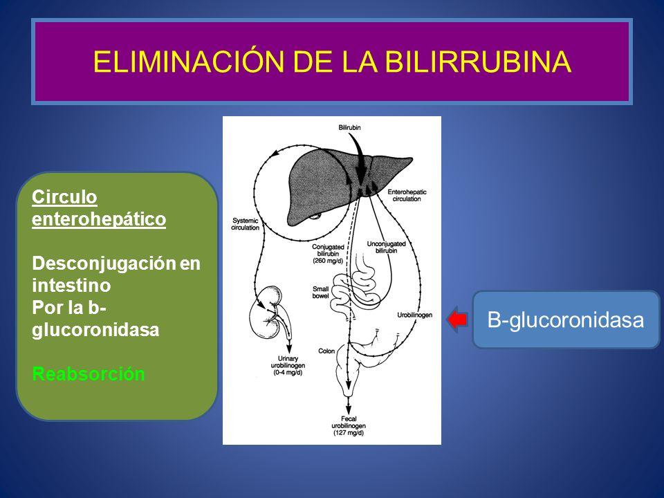ELIMINACIÓN DE LA BILIRRUBINA