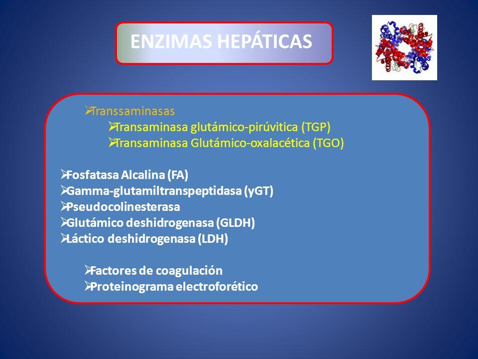ENZIMAS HEPÁTICAS Transsaminasas