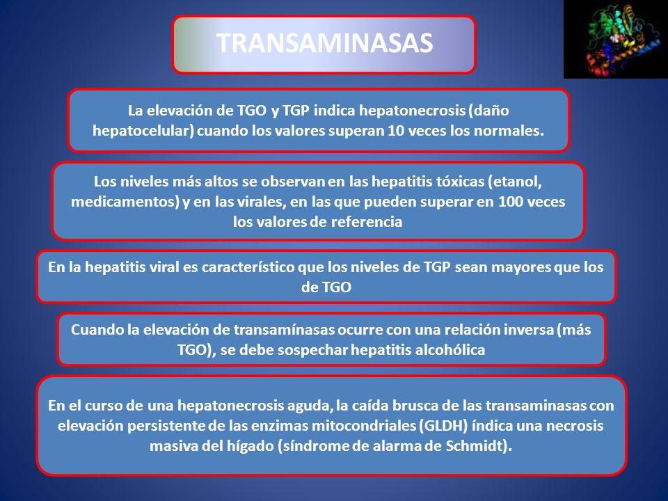 TRANSAMINASAS La elevación de TGO y TGP indica hepatonecrosis (daño hepatocelular) cuando los valores superan 10 veces los normales.