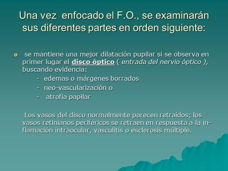 Una vez enfocado el F.O., se examinarán sus diferentes partes en orden siguiente: