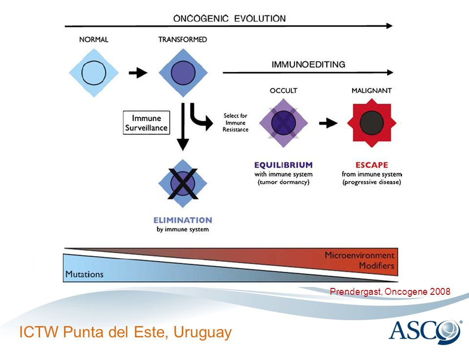 Figure 1 Integration of immunoediting and oncogenesis during cancer progression. Oncogenesis initiates the formation of