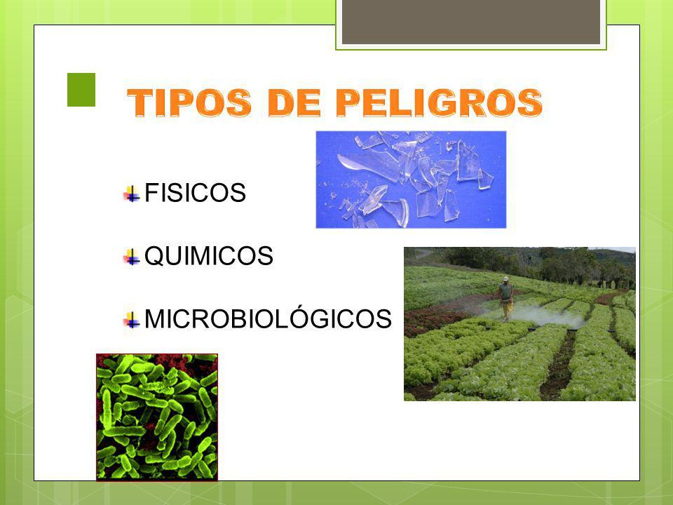 TIPOS DE PELIGROS FISICOS QUIMICOS MICROBIOLÓGICOS