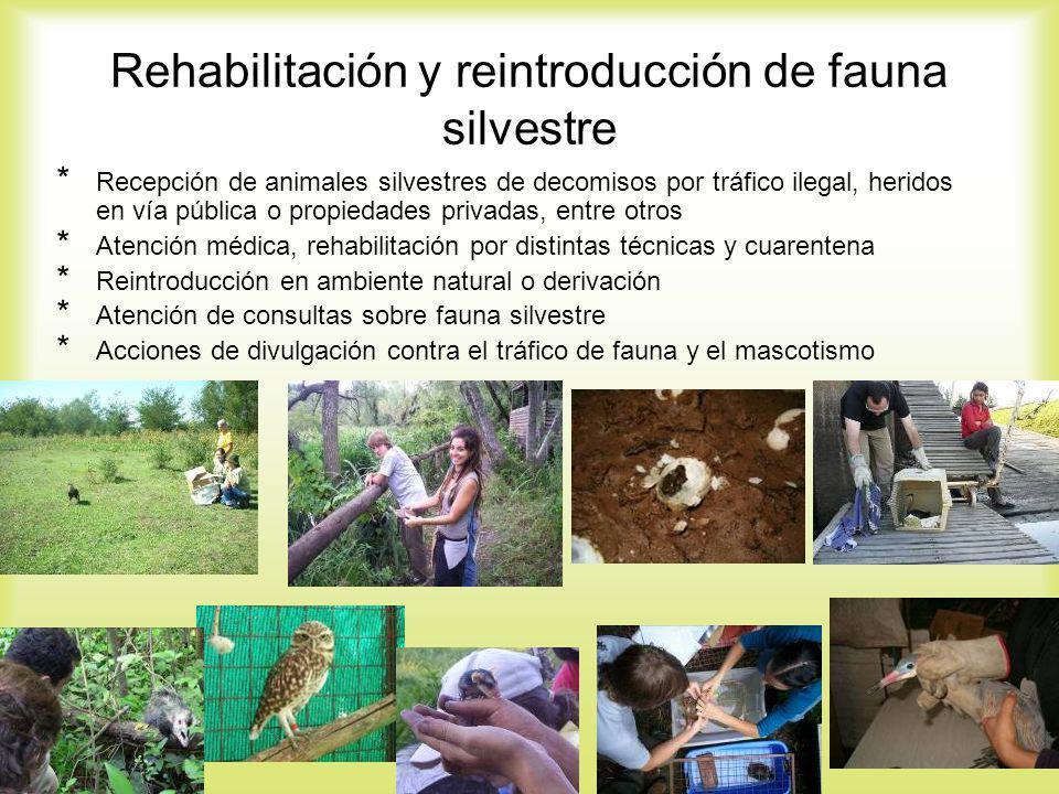 Rehabilitación y reintroducción de fauna silvestre