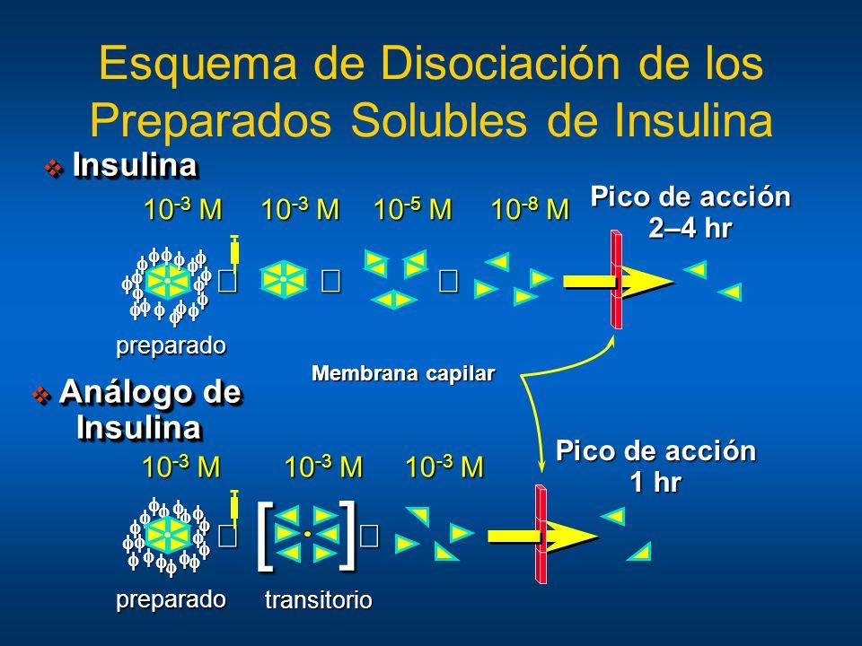 Esquema de Disociación de los Preparados Solubles de Insulina