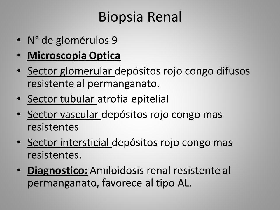 Biopsia Renal N° de glomérulos 9 Microscopia Optica