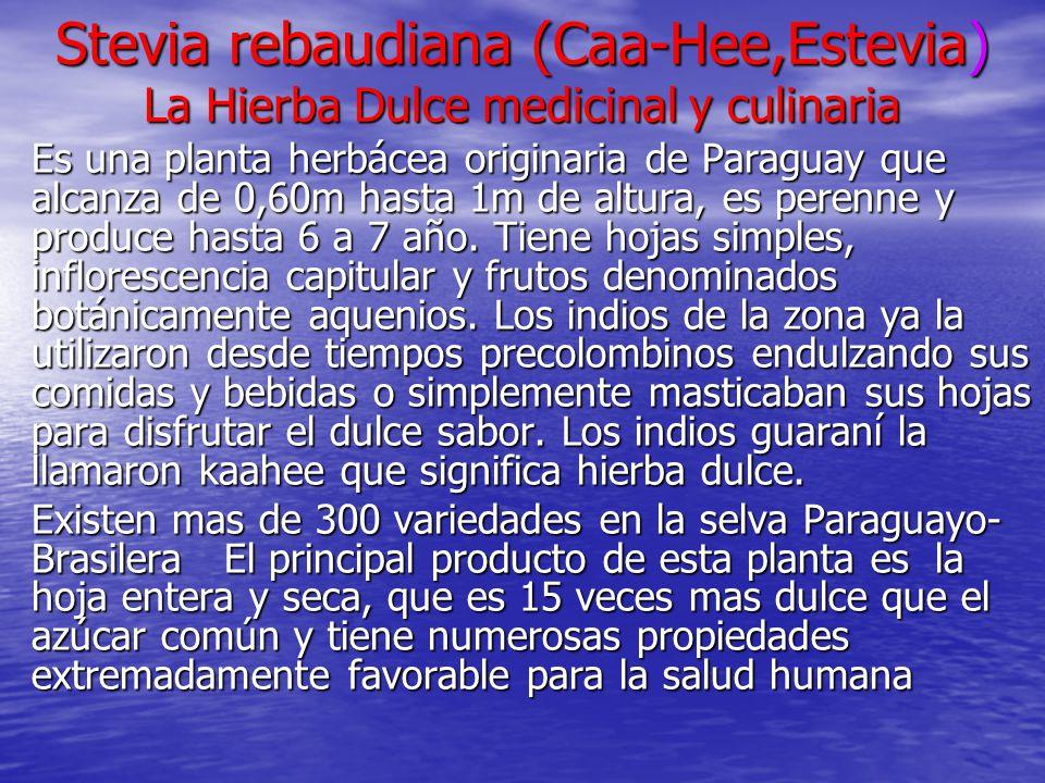 Stevia rebaudiana (Caa-Hee,Estevia) La Hierba Dulce medicinal y culinaria