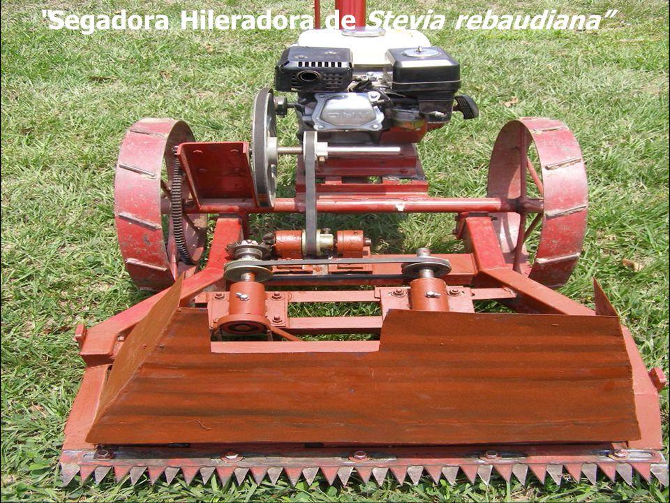 Segadora Hileradora de Stevia rebaudiana